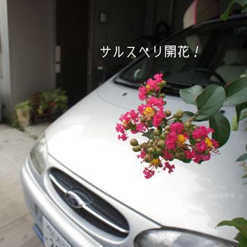 DSC03498_25263.jpg