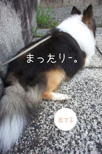 DSC03693_25458.jpg