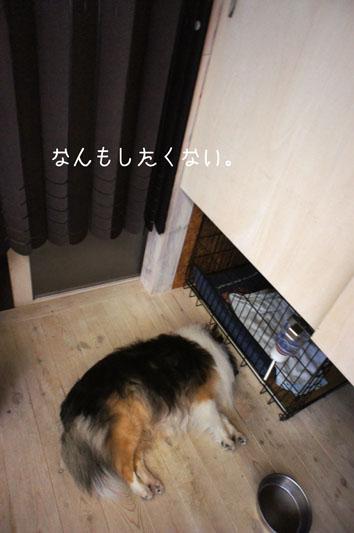 DSC03827_19308_20120420155441.jpg