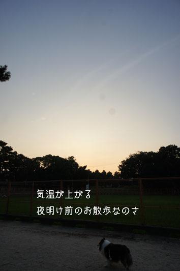 DSC03873_25659.jpg