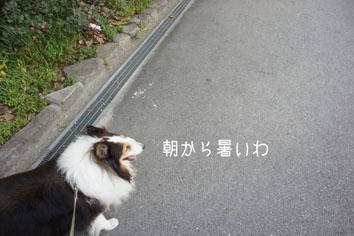 DSC04114_25898.jpg