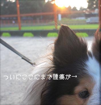 DSC04271_26055.jpg