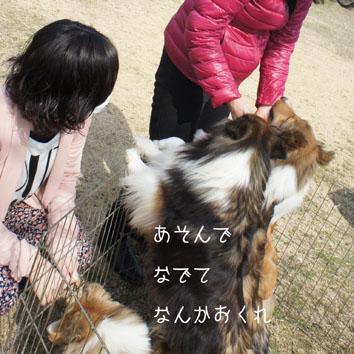 DSC04306_39906.jpg