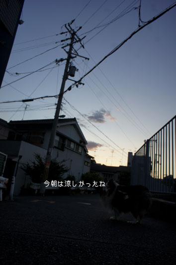 DSC04362_26163.jpg