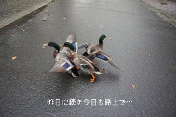 DSC04645_20135.jpg