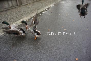 DSC04646_20136.jpg