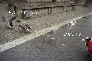 DSC04647_20137.jpg
