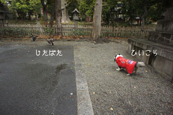 DSC04651_20141.jpg