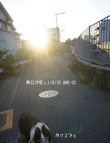 DSC04950_26795.jpg