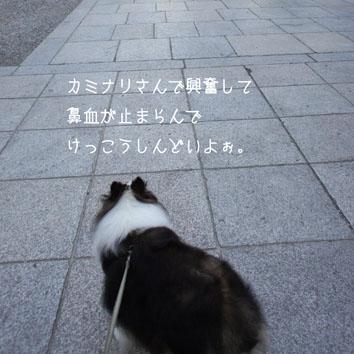 DSC04977_26822.jpg
