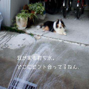 DSC05011_26856.jpg