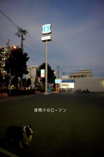 DSC05243_27087.jpg