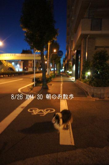 DSC05841_27721.jpg