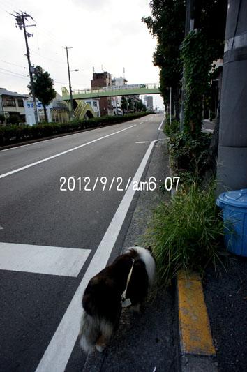 DSC06308_28208.jpg