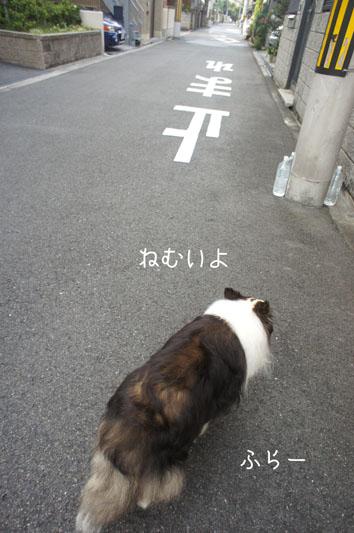 DSC06978_28927.jpg