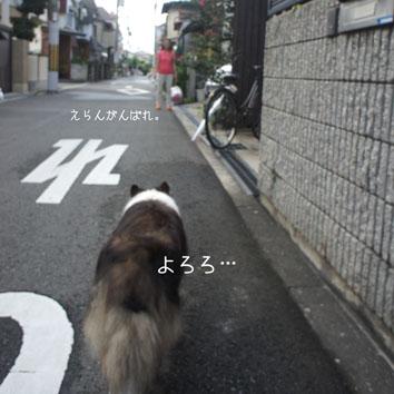 DSC07080_29029.jpg