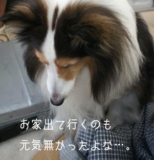 DSC08639_15304.jpg