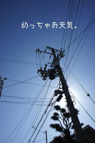 DSC08666_15331.jpg
