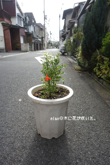 DSC09819_33691.jpg