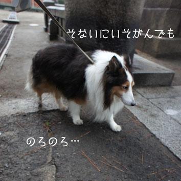 DSC09979_16814.jpg