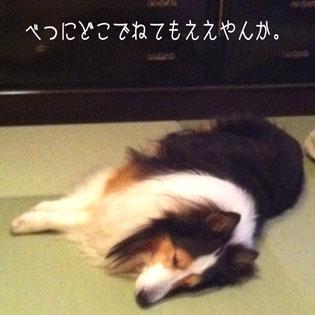 IMG_8523_15594.jpg