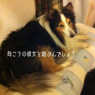IMG_8577_16042.jpg