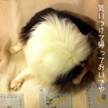 IMG_8641_16632.jpg