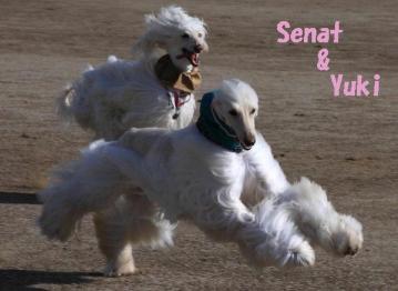 Senat&Yuki2007