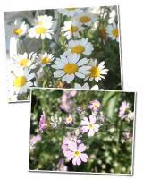 エリス撮影のお花たち