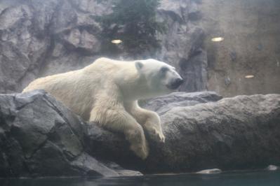 旭山動物園8