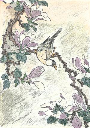 辛夷の花と文鳥blog01