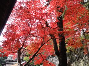 神峯山寺blog05