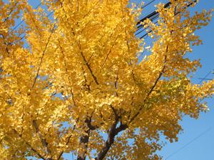 2011.11.30吹田blog01