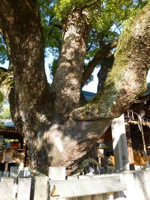 石切神社blog04