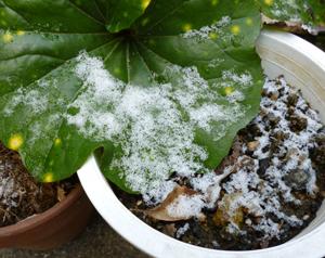 2012.2.18雪blog01