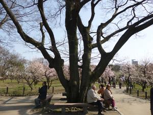 2012.3.21大阪城blog02