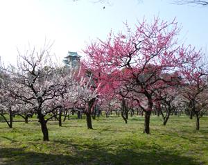 2012.3.21大阪城梅林blog04