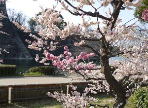 2012.3.21大阪城梅林blog02