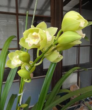 2012.4.1蘭blog01