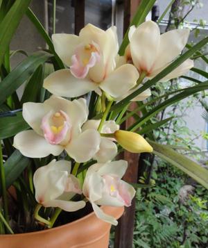 2012.4.1蘭blog02