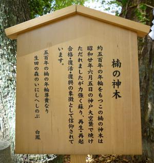 生田神社ご神木blog02