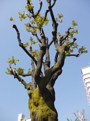神戸中山手通りblog01