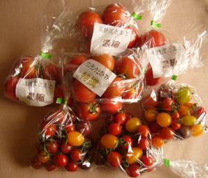 寺本農園トマトblog01