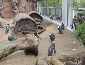 京都水族館blog04