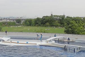 京都水族館blog08
