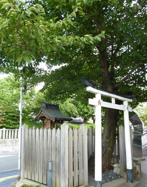 2012.8.28桜blog01
