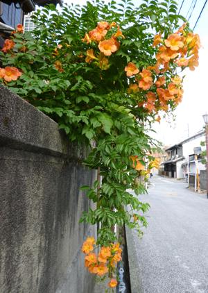 2012.8.28光松寺blog01