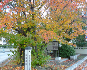 2012.11.14桜blog01