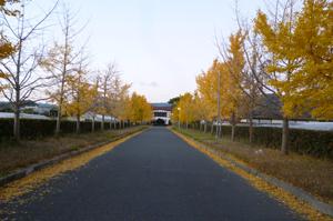 晩秋の夕刻blog01