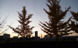 晩秋の夕刻blog03
